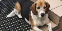 znaleziono psa w Orzeszkowie
